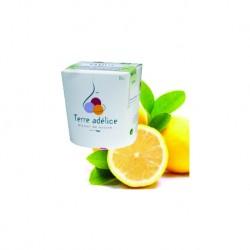 Mirvine : Sorbet citron bio Terre Adélice