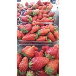 Mirvine : fraises de Bessenay